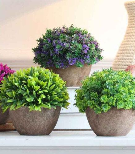 Plantes-en-pot