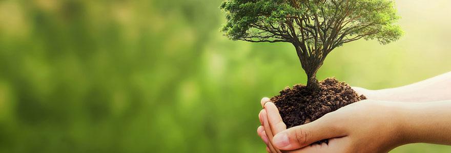 Plantation des arbustes
